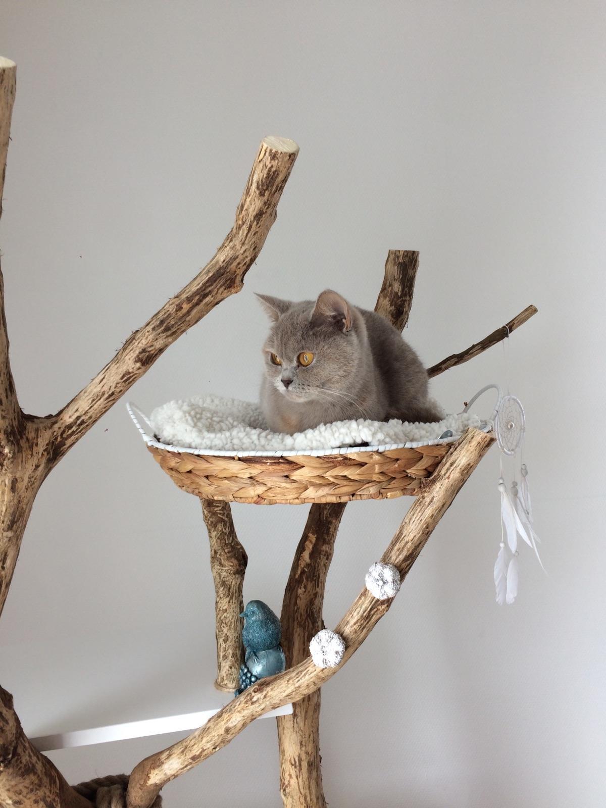 le blanc pour ivoire et maya mon arbre chat original. Black Bedroom Furniture Sets. Home Design Ideas